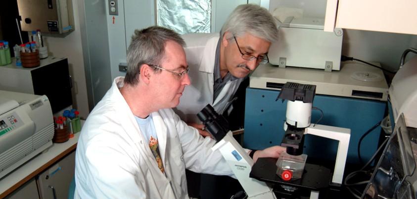 Deux professionnels de recherche devant un microscope
